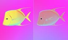 Alcuni pesci diventano invisibili manipolando la luce polarizzata