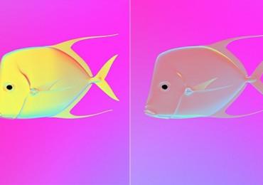 Pesce selene, vista polarizzata
