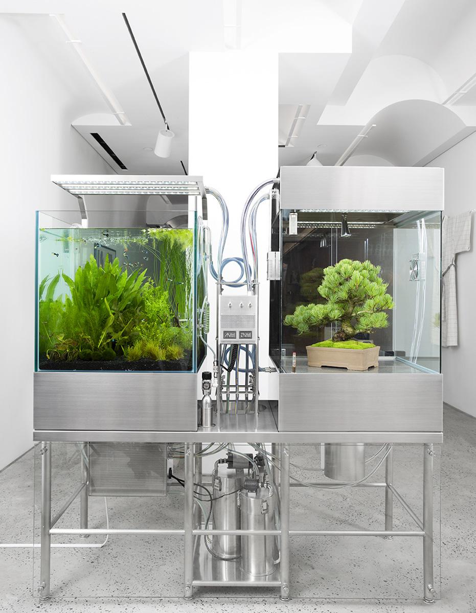 """""""Paludarium OSAMU"""" di Azuma Makoto foto di www.advancedaquarist.com"""