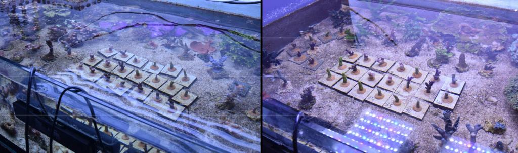 plafoniera philips coralcare contro ati sunpower 2