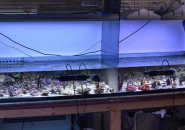 plafoniera philips coralcare contro ati sunpower