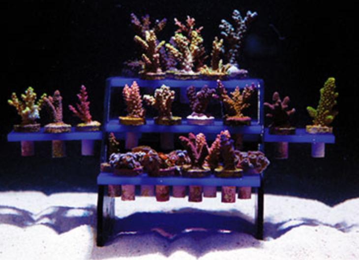 Il ReefRack completo di talee, immagine di innovative-marine.com