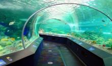 5 piccoli acquari pubblici da non perdere – Cattolica – Malta – Zurigo – Parigi e Toronto
