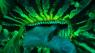 Coralli LPS in Macro Time Lapse - tutti da vedere!