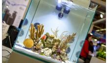 5 idee per passare da un grande acquario ad un nanoreef