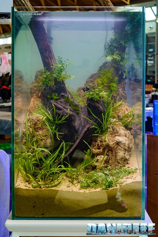 2016_03 Animal Show Crystal Reef acquario a scarpata 33