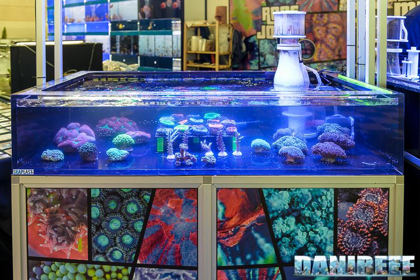 2016_03 Animal Show Reef Jocker 01
