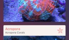 Atoll – applicazione gratuita per iPhone ed iPad per l'identificazione dei coralli