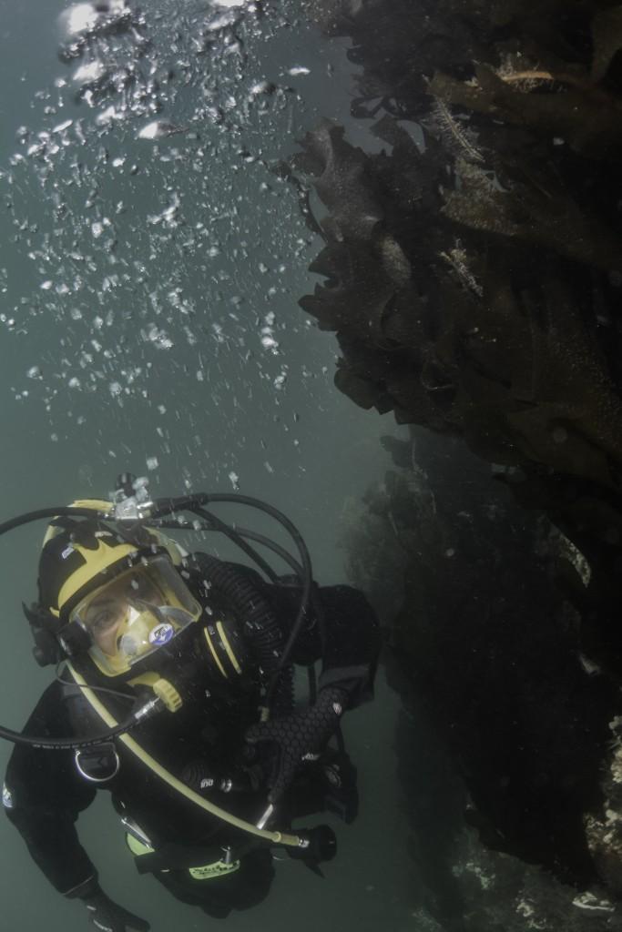 Roberta D'Archino durante un'immersione, foto di Peter Mariott