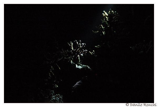 Coralli illuminati da luce notturna