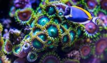 Una ricerca mostra come bloccare la crescita di qualunque pesce marino