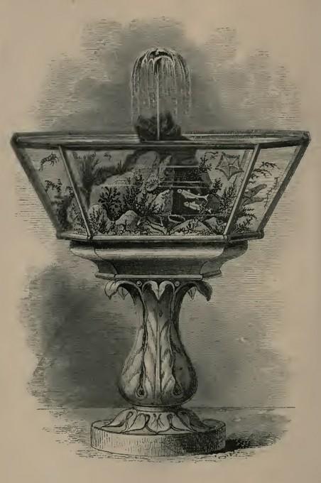 Acquario marino d'epoca vittoriana, la fontana è una soluzione interessante per muovere ed ossigenare l'acqua. . Imagine di Gosse (1856).