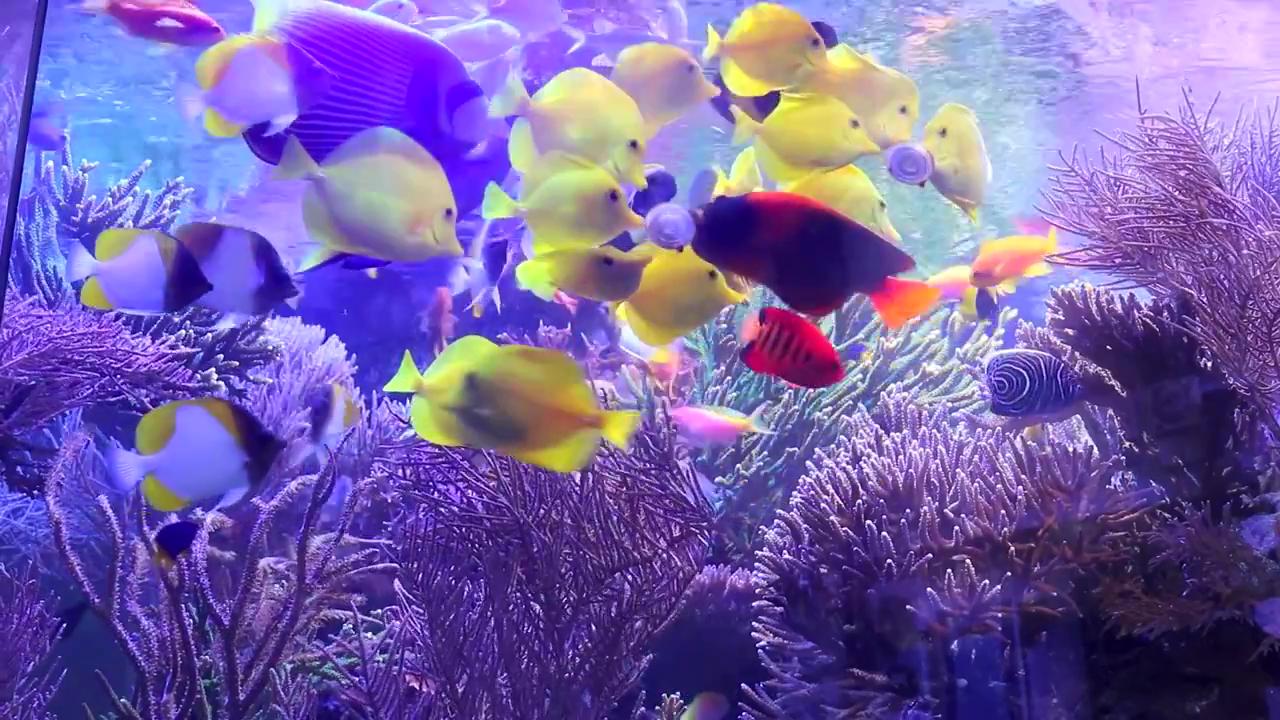acquario gigante di Martin Lakin: 5000 litri: i pesci