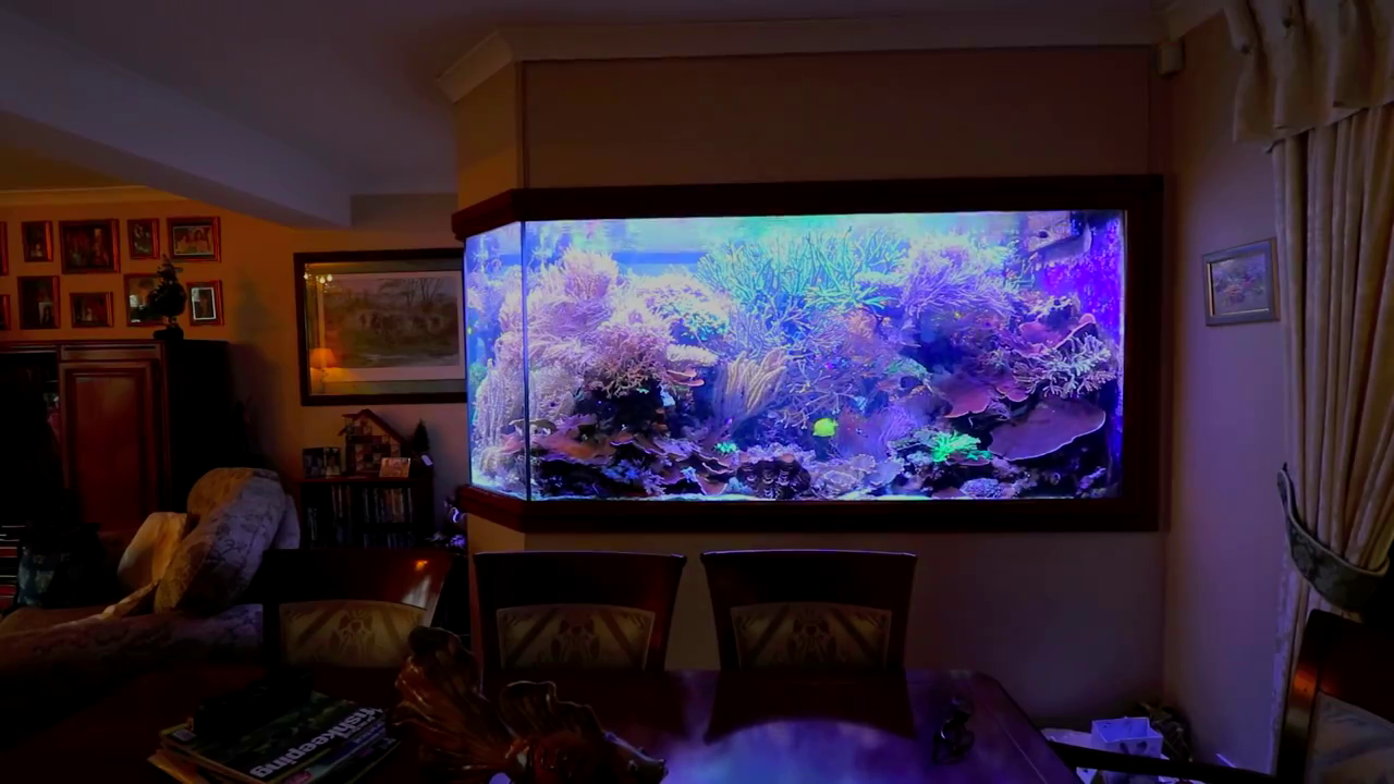 Manda la moglie al mare e costruisce un acquario gigante da 5000 litri