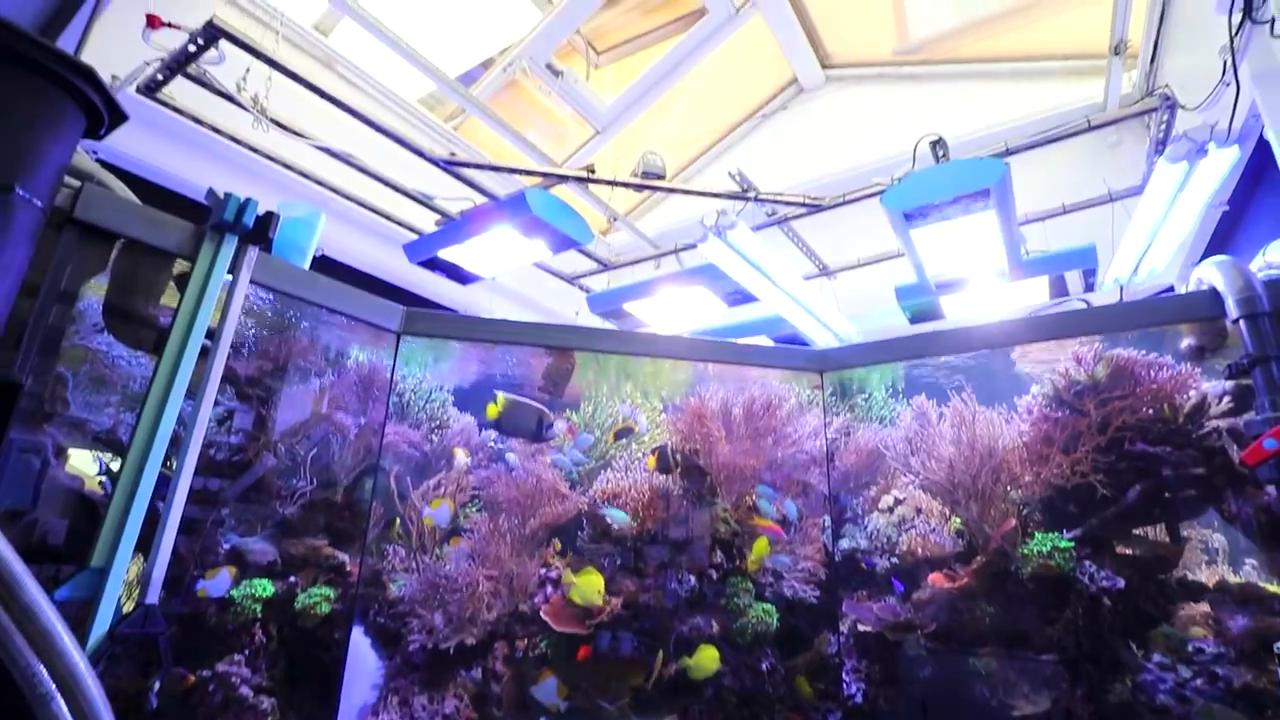 acquario gigante di Martin Lakin: 5000 litri - la sala tecnica