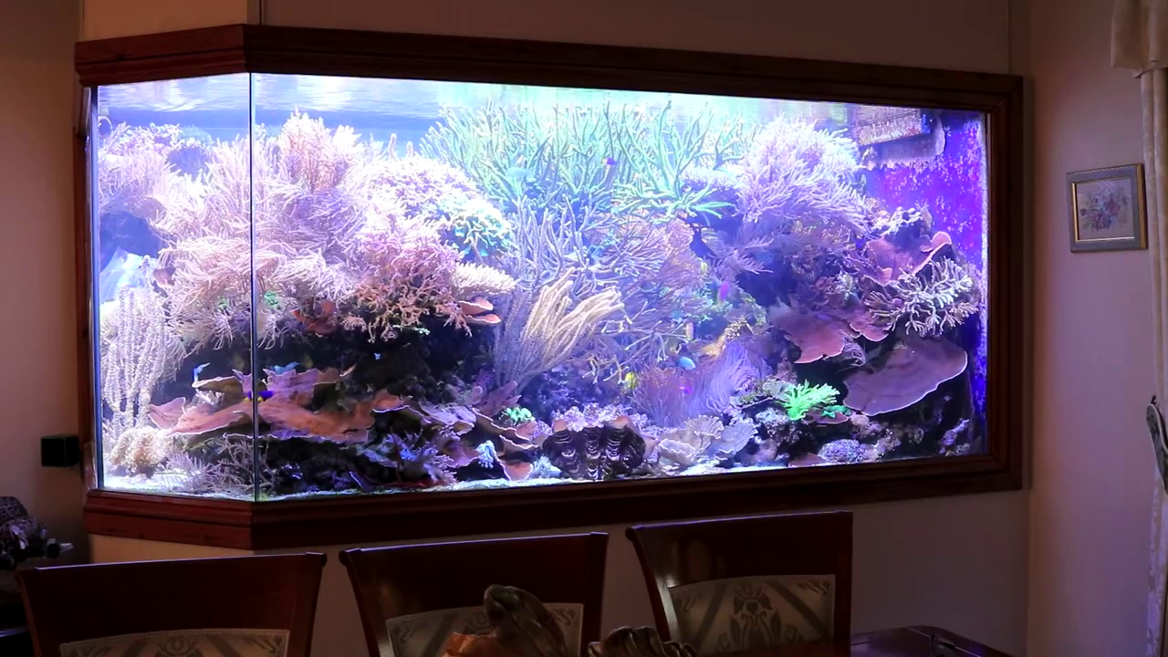 acquario gigante di Martin Lakin: 5000 litri