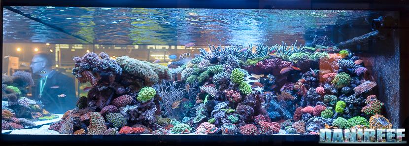 2016_05 Interzoo Norimberga Dejong Marinelife coralli e pesci 04