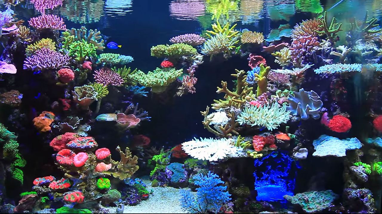 Un acquario marino spettacolare con canyon centrale for Pompette per acquari