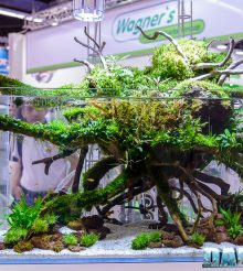 Aquascaping at Anubias booth with TeknoGreen lamps during Interzoo 2016