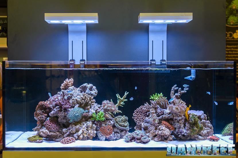 Posizionando i coralli SPS in alto e gli LPS più in basso possiamo ottimizzare l'utilizzo della luce.