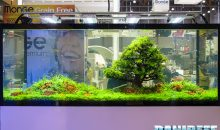 Interzoo 2016: lo stand AquaFlora e l'aquascaping in video UHD 4K