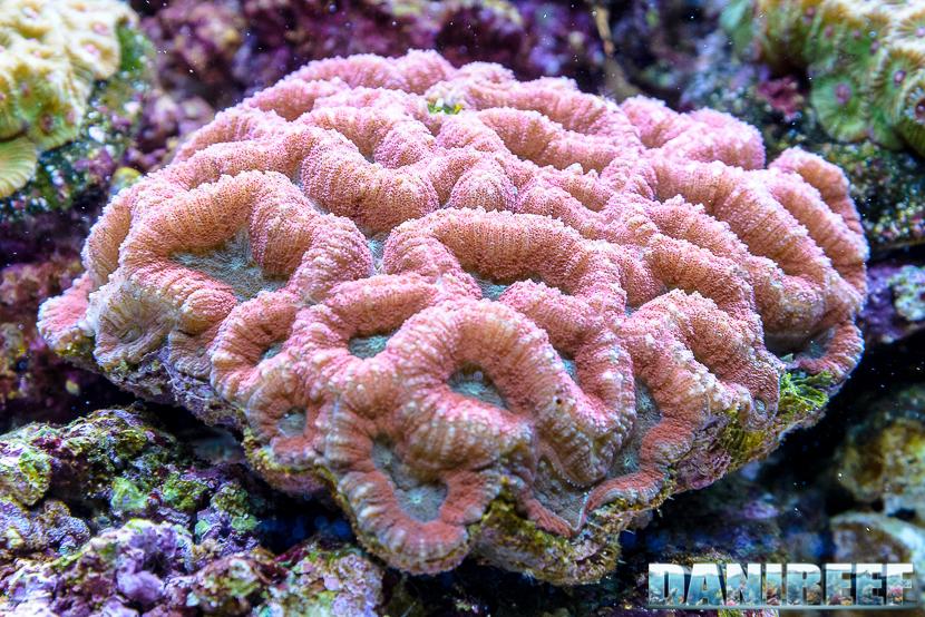 Bellissimi coralli LPS in mostra a Norimberga.