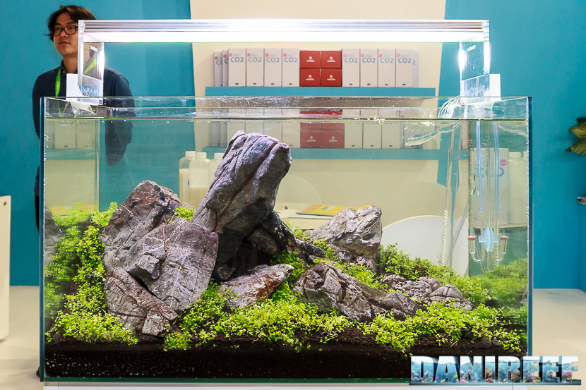 L'acquario Iwagumi - vediamo assieme tutte le sue caratteristiche