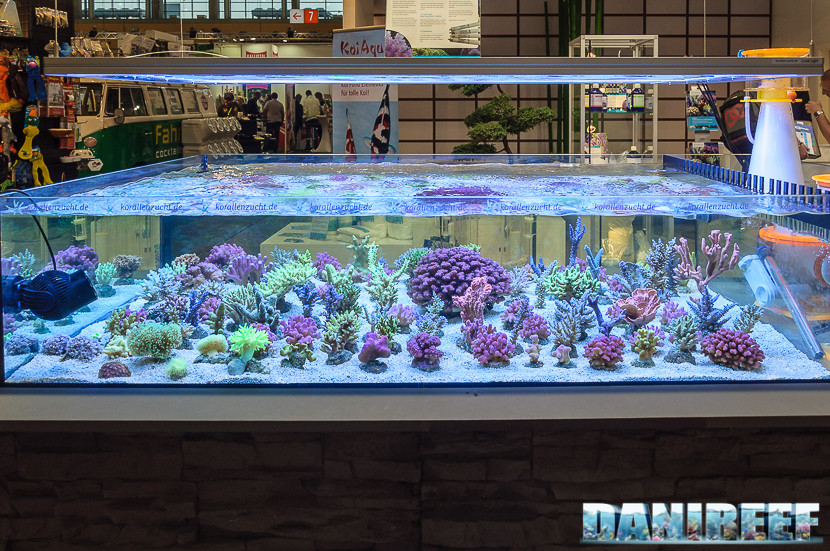 2016_05 Interzoo Norimberga korallen zucht 1444
