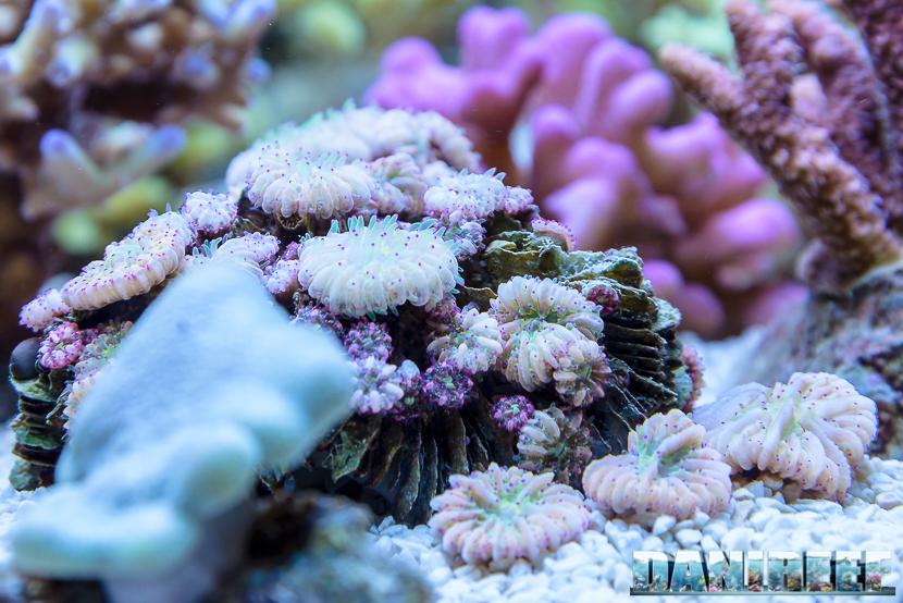 2016_05 Interzoo Norimberga korallen zucht fungia 1510