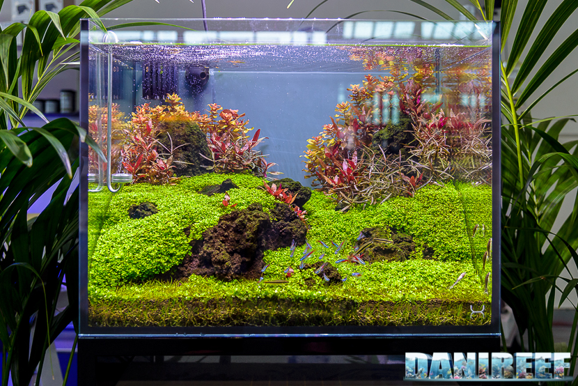 Aquascaping Layout Simone Castagnoli