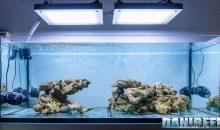 Philips CoralCare in Anteprima sul mio acquario marino