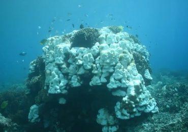 coral-bleaching-bali-menjangan