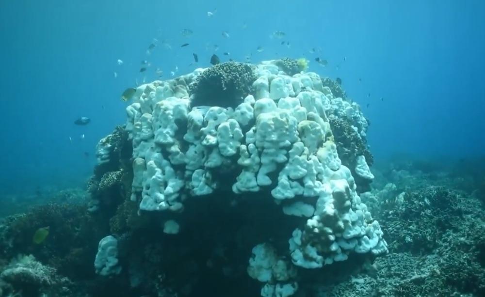 sbiancamento coralli nella grande barriera corallina australiana