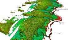 Scoperto un Reef creato dallo scheletro dell'alga Halimeda… strano ma vero