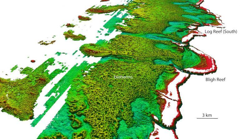 bioherm di alga halimeda