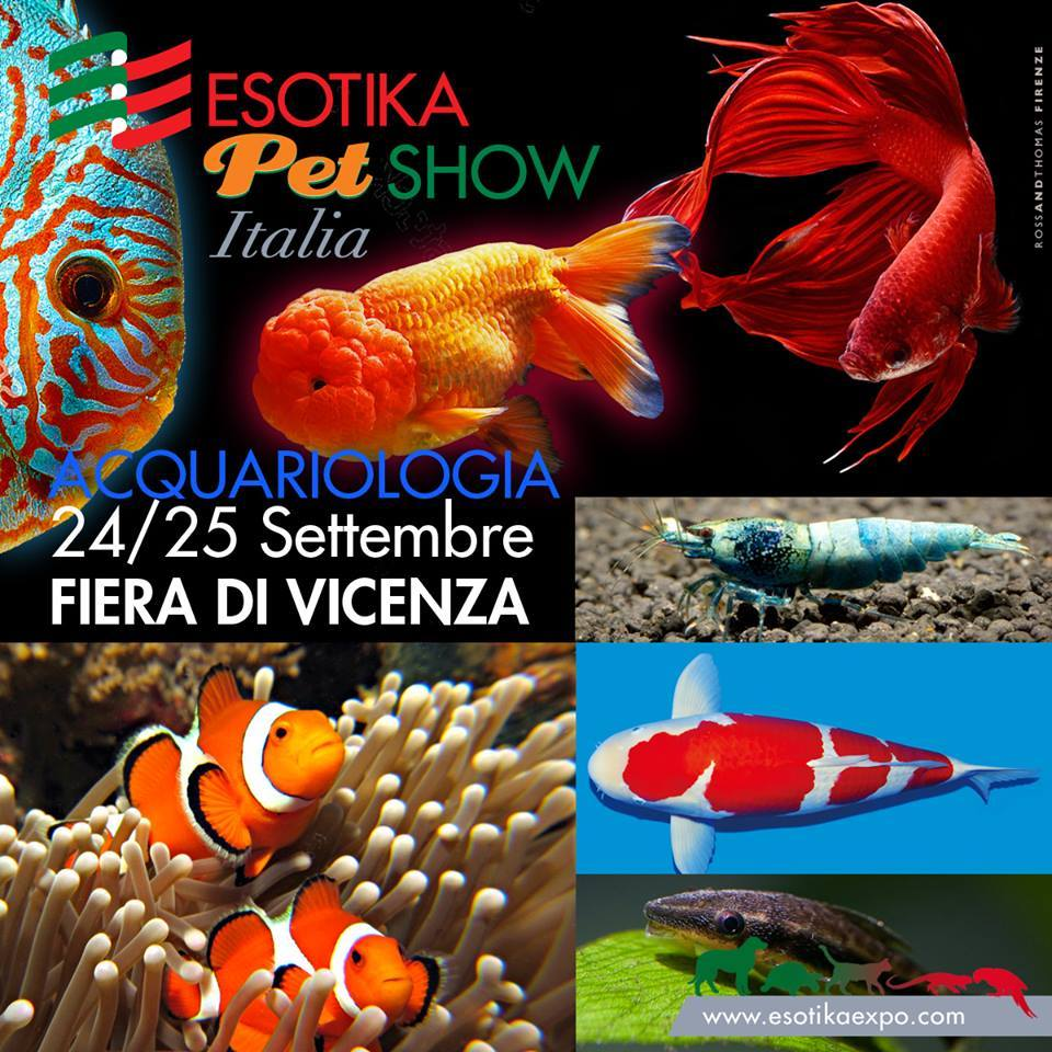 esotika-vicenza-2
