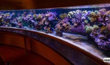 Un acquario da 6 metri con vetro frontale concavo? Esiste e ve lo mostriamo!