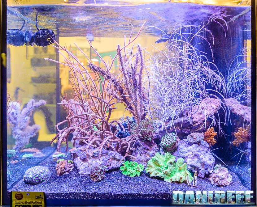 Acquario con varie specie di gorgonie