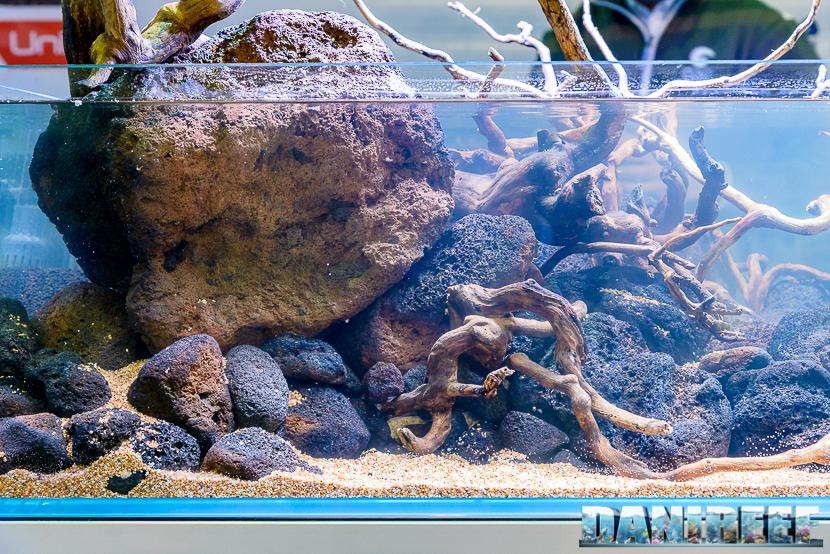 201610-aquascaping-contest-gaia-itau-vs-fact-petsfestival-174-copyright-by-danireef