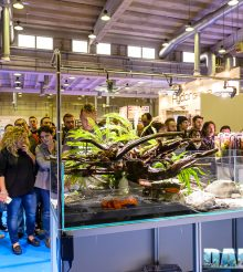 PetsFestival 2016 Aquascaping with ITAU Gaia Italia Equo Anubias and Newa