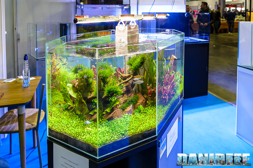 201610-aquascaping-layout-malberti-petsfestival-tekno-green-247-copyright-by-danireef