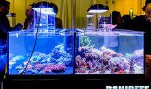 Tunnel sensoriale e bellissimi acquari da Barriera Corallina al PetsFestival 2016
