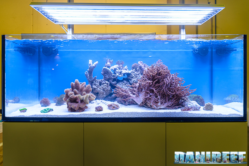 201610-coralli-e5-layout-oceanlife-petsfestival-23-copyright-by-danireef