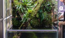 Il paludario – biotopo perfetto sotto tutti i punti di vista