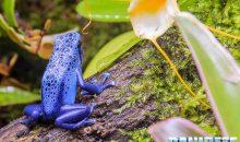 Biopod – un ecosistema vivente in casa vostra completamente autonomo