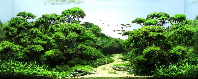 Come allestire un bonsai in acquario