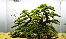 Come allestire un bonsai in acquario, vi piace l'idea?