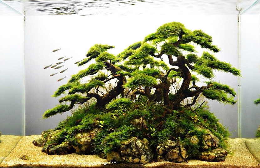 Come allestire un bonsai in acquario
