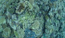 L'acidificazione degli oceani sta rallentando la crescita della barriera corallina