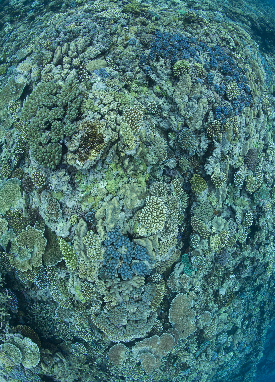 360-coral-reef